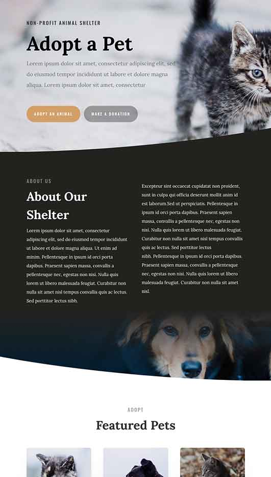 Jackson-Demo-Site Web Design & Development